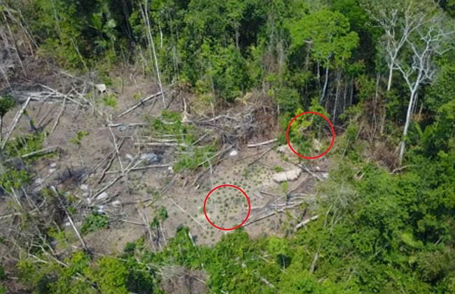 Drone Discovers Mysterious, Uncontacted Amazon Tribe